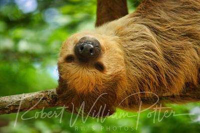0902-Sloth
