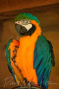 1120-Pretty Bird