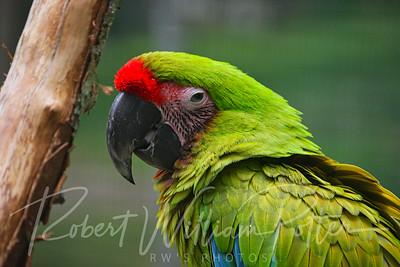 0824-Parrot