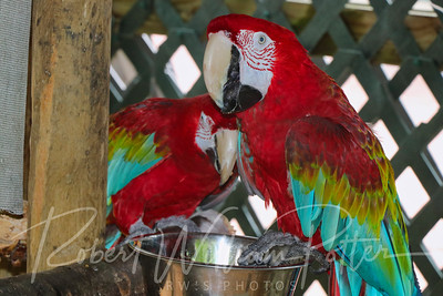 3445-Macaws