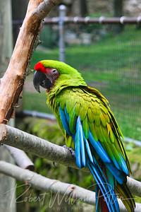 0826-Parrot