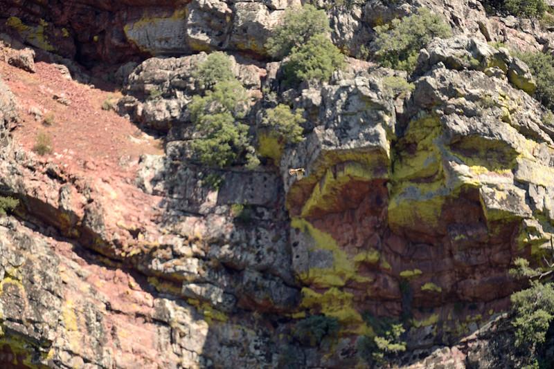 Kestrel at Puerto de san Vicente