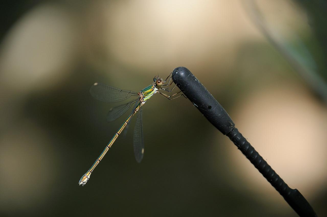 Camper Fly