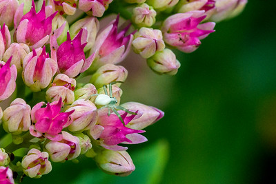 Garden Flowers & Bugs_850-5178