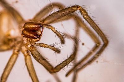 spider_macro-5299