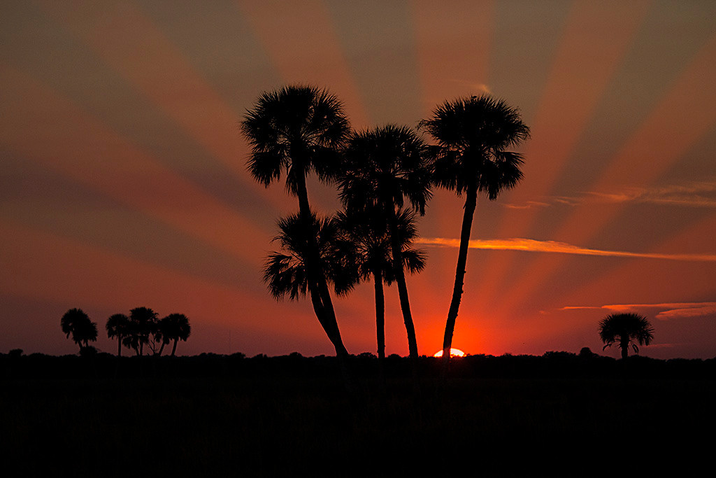 This was a pretty sunset taken from the Moccasin Island Tract in Viera, FL, to which I added a little creativity.