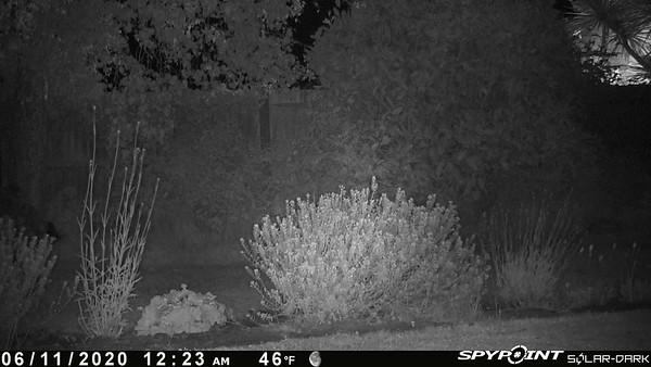 First view of the garden fox