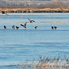 Bald Eagles on ice in the middle of the Squaw Creek refuge. (Image to show how far away they were, only cropped slightly at top and bottom)