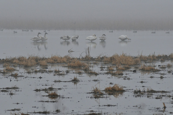 Squaw Creek Refuge With Fog 12.2.2012