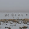 Squaw Creek Wildlife Refuge with sunshine and fog 12.2.2012