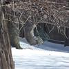 spring snow 3-31-140011