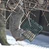 spring snow 3-31-140010