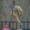 Thief or Acrobat?