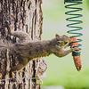 Crossfit Squirrel