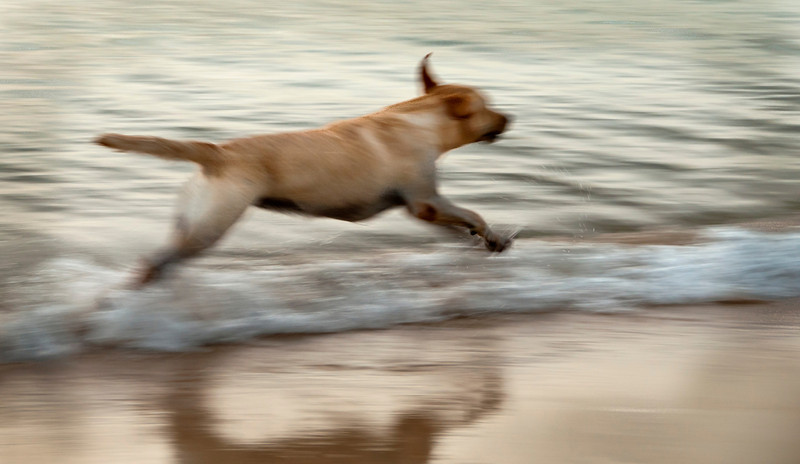 St. Lucia 2012 - Reduit Beach - Dog in Motion