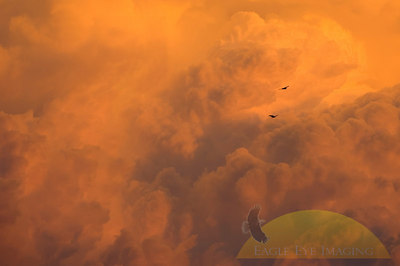 A thunderstorm moves into over a midwest town at sunset as two turkey vultures make their way through the sky.