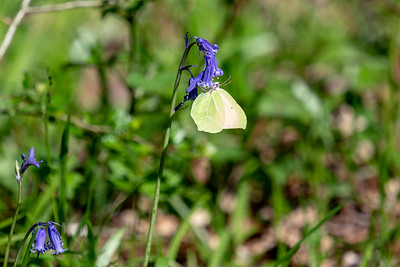 Ebernoe Common-13