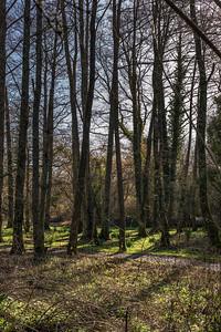 Woods Mill-5