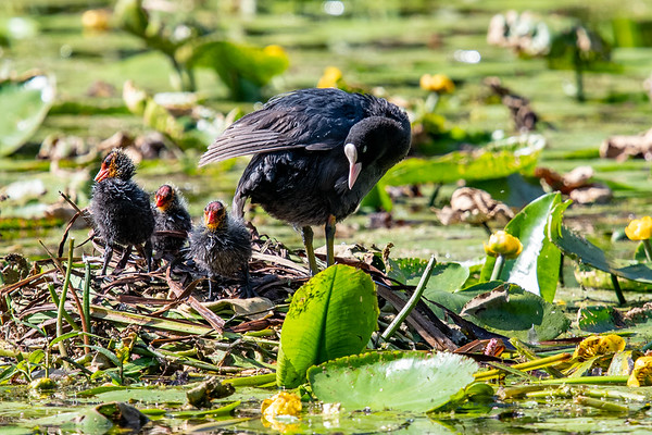 A cute Coote family
