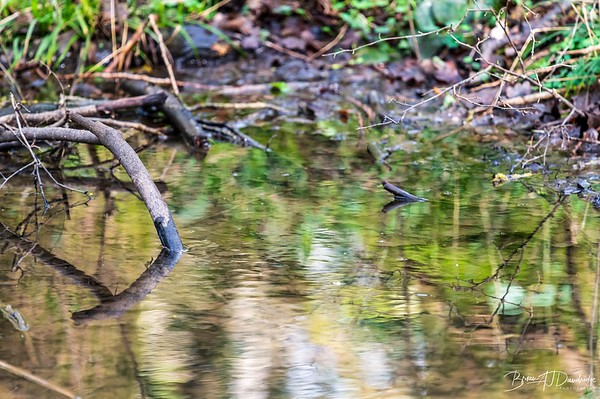 Reflections in a woodland pond at Woods Mill