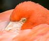 Flamingo - Nov 2016