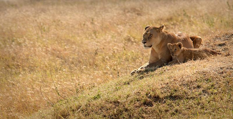 Serengeti - Lioness with Cub