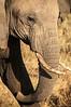 Serengeti - Elephant at Sunset