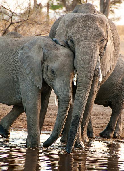 Serengeti -Elephants at Waterhole