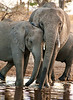 Serengeti -Elephants at Waterhole