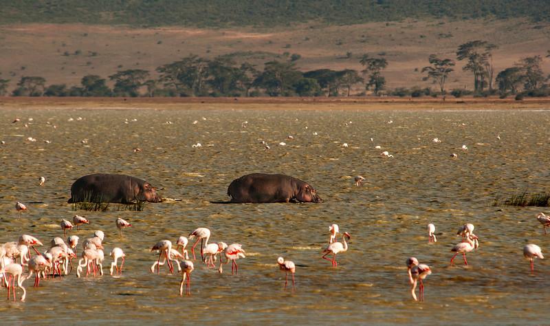 Ngorongoro Crater - Magadi Lake - Hippos & Flamingos
