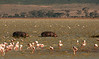Ngorongoro Crater - Magadi Lake - Hippos & Flamingos