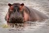 Ngorongoro Crater - Hippo