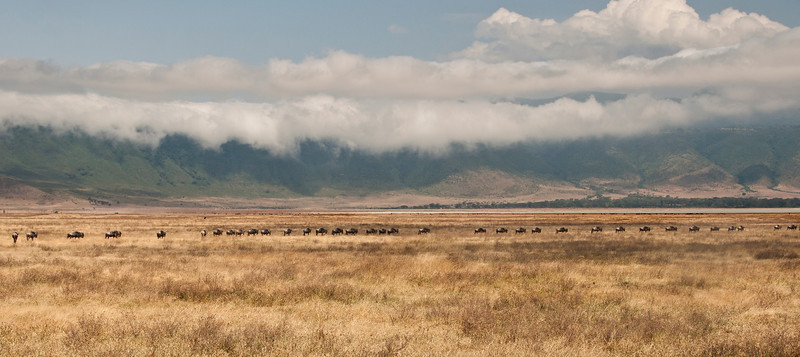 Ngorongoro Crater - Wildebeast