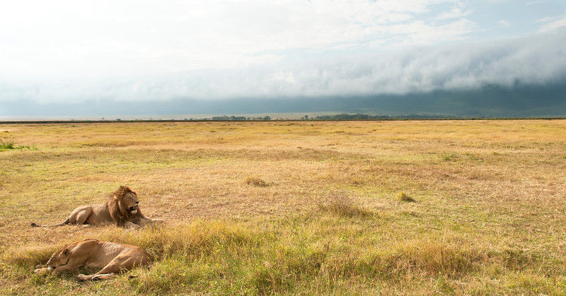 Ngorongoro Crater - Lion & Lioness