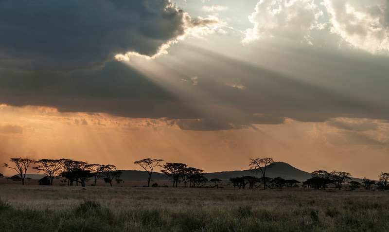 Serengeti at Sunset