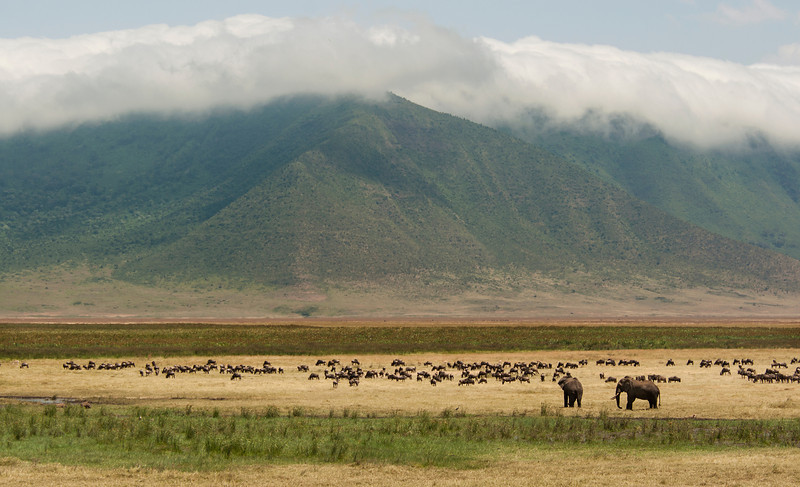 Ngorongoro Crater - Elephants & Wildebeasts in the Crater