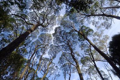 Canopy contours.