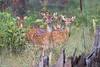 deer smugmug-3