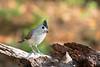 texas bird smugmug-3