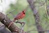 texas bird smugmug