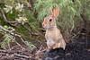 texas wildlife smugmug
