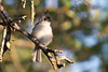 texas bird smugmug-5