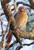 texas bird smugmug-4