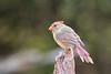 texas bird smugmug-6