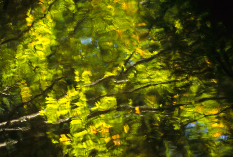 A reflection in a Vermont stream turns into a work of art.