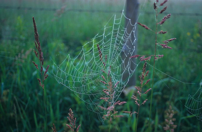 Oh, what a web we weave.