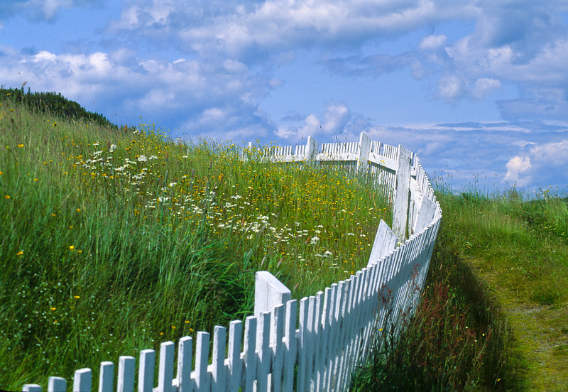This image makes the perfect photographic picture.  The wildflowers on one side of the fence and the path on the other.  The fence can be seen on both sides and follows off into the distance.  Not to mention the clouded sky.