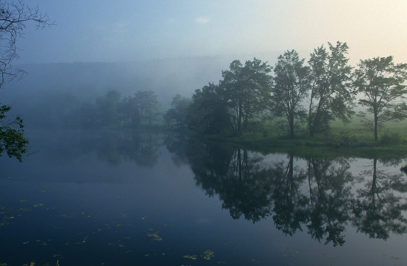 A foggy morning on a small forested pond.