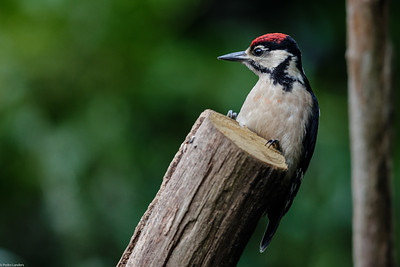 Mr Woodpecker Again