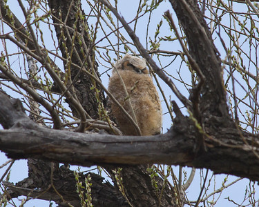 The Owl family 2018-04-23